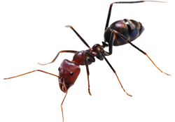 cockroaches, rodents, flying insects, ants, spiders, bedbugs and fleas, Bird Proofing and General Fumigation services